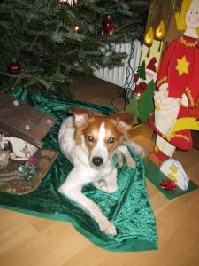 Emmi' s erstes Weihnachtsfest